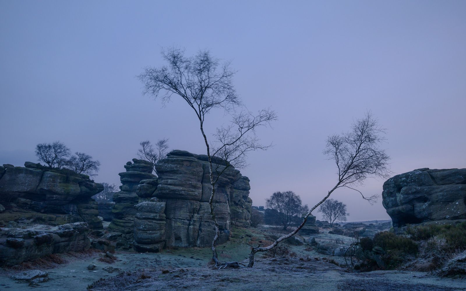 The oriental birch tree twins - Brimham Rocks at Dawn