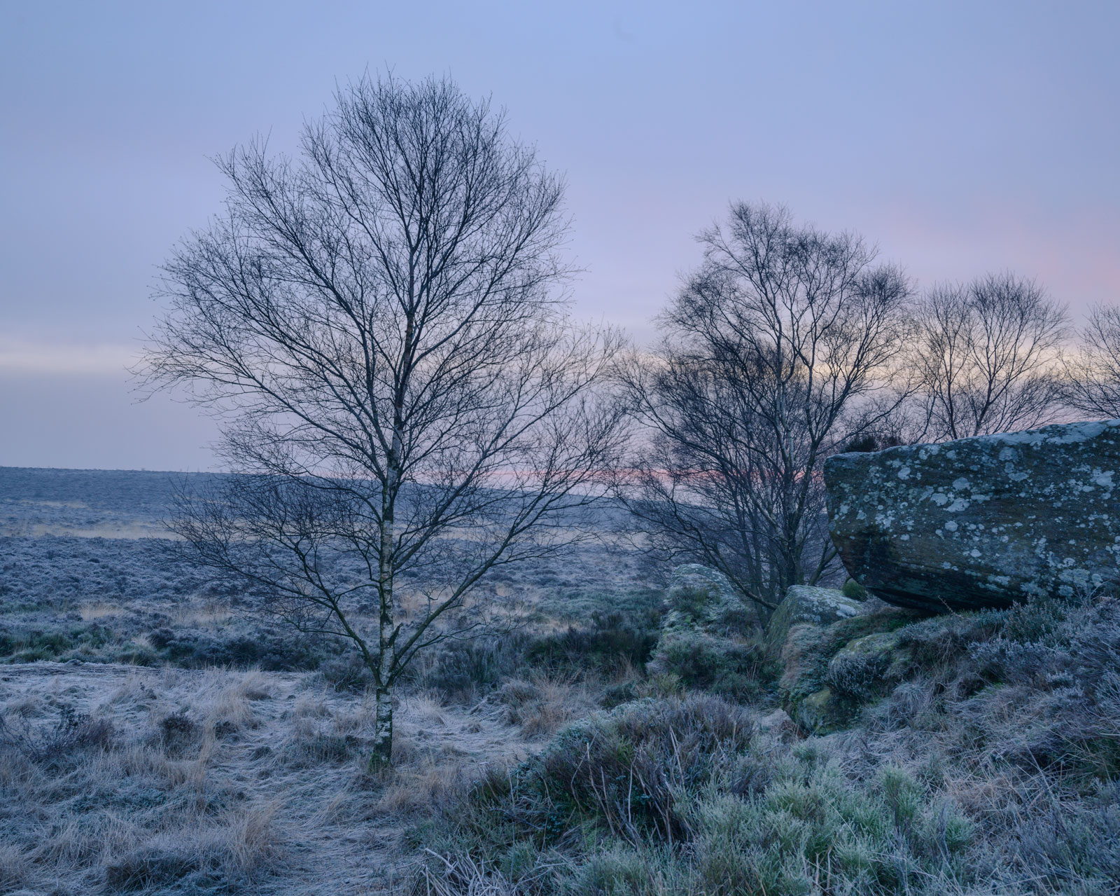 Birch trees and boulders at Dawn, Brimham Rocks
