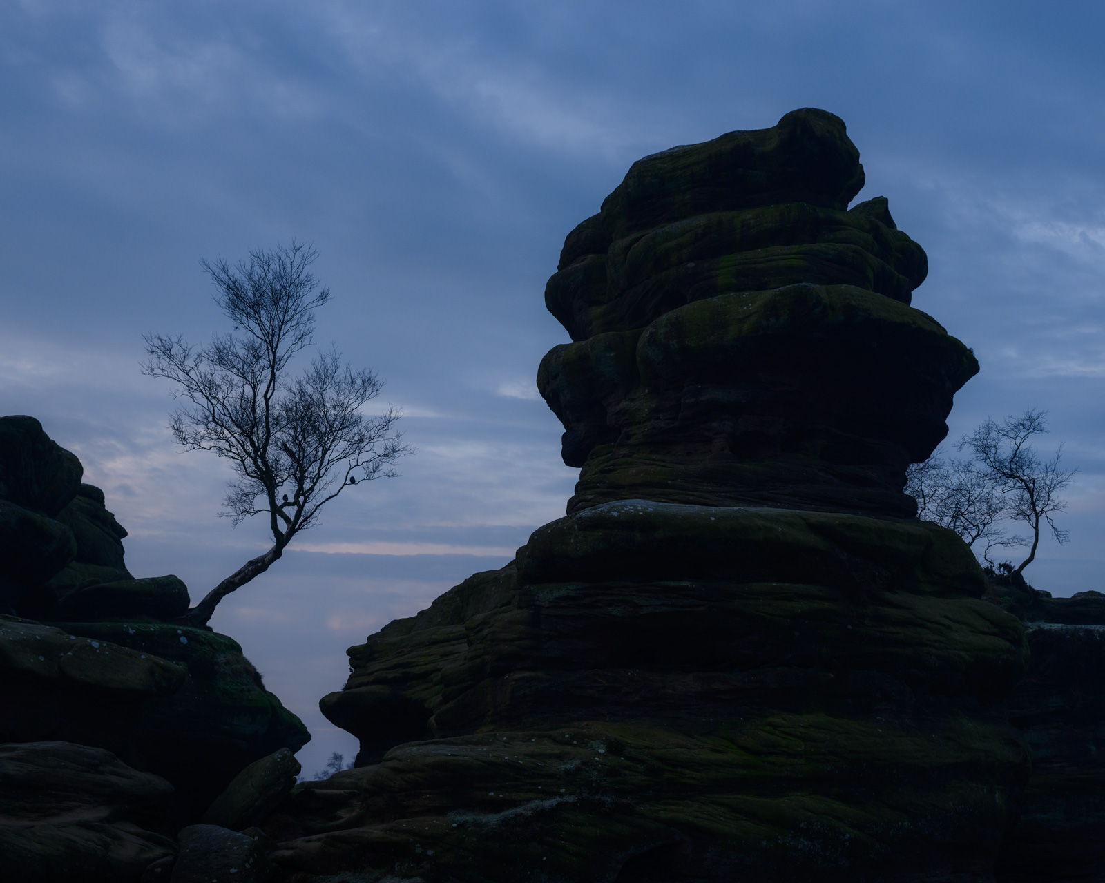'That' tree and millions of faces in the rock - Brimham Rocks in silhouette