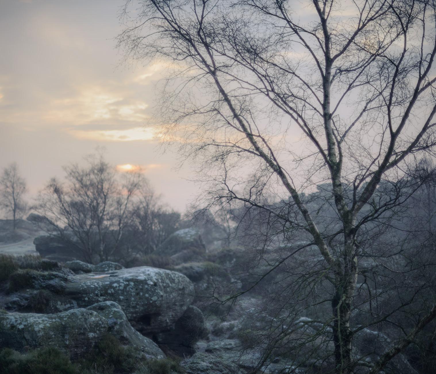 Birches and rocks - Nikon 50mm at f/1.2