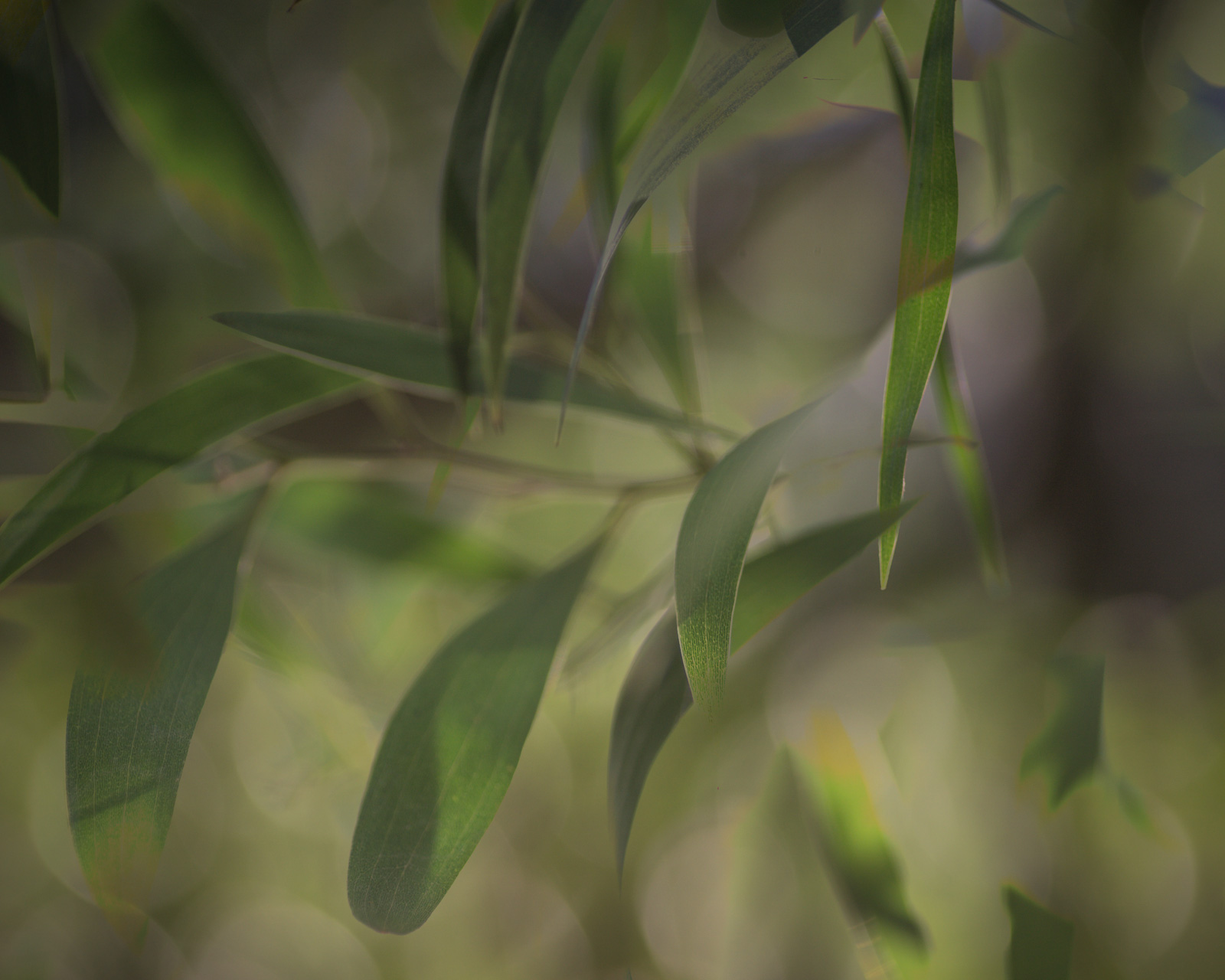 Multiple exposure image created in Photoshop using 'darken' blend mode