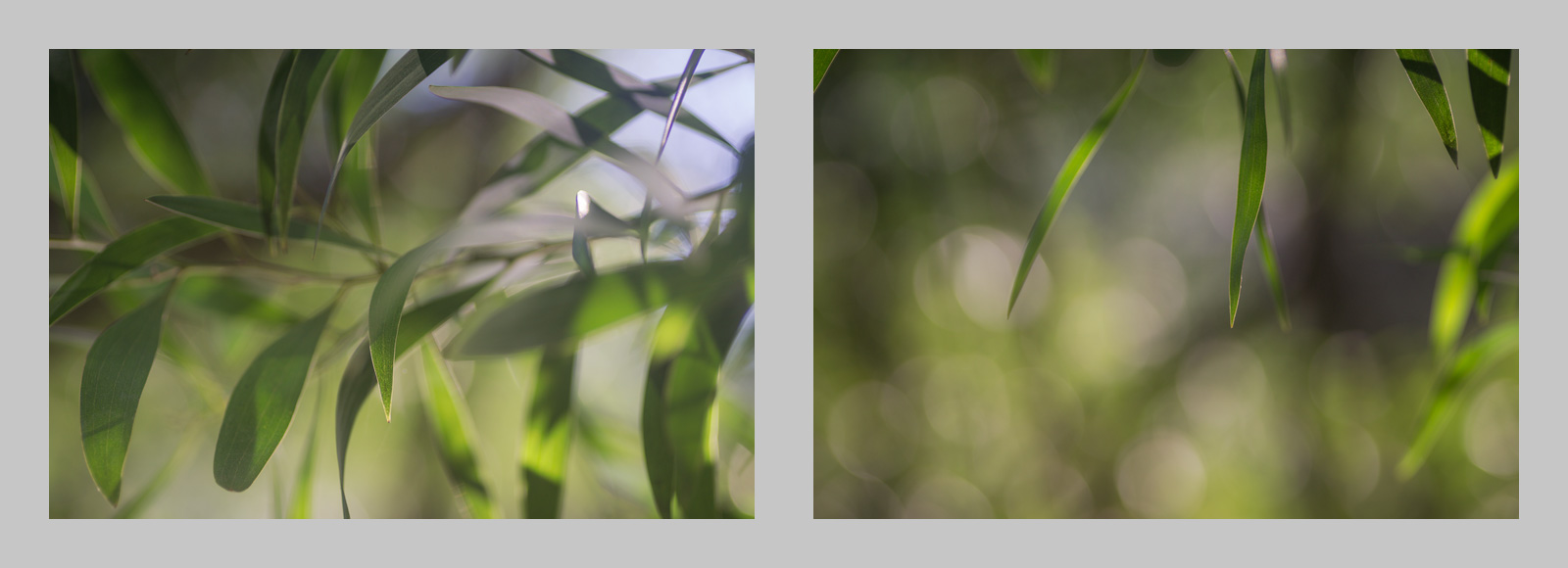 Two frames shot with the Sony A6000 - constituent parts of the multiple exposure jpeg created in camera
