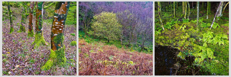 Coastal woodland tryitych, Isle of Arran
